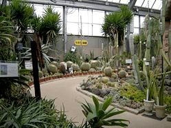福知山市都市緑化植物園,京都,子連れ,植物園