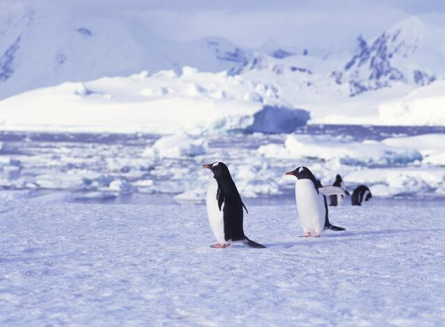 南極のペンギン,プラネタリウム,サンシャイン,