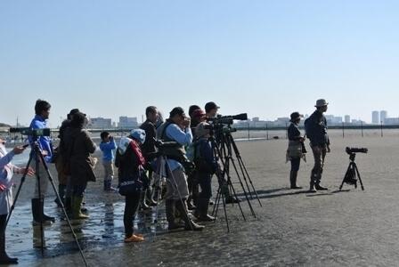 海鳥の観察会,ふなばし三番瀬海浜公園,
