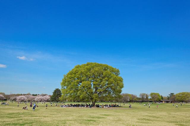 昭和記念公園の芝生,授乳,室,