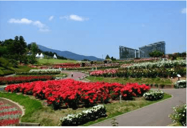 茨城県フラワーパークバラのテラス,茨城,植物園,おすすめ