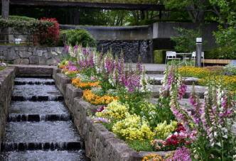 水戸市植物公園テラス,茨城,植物園,おすすめ