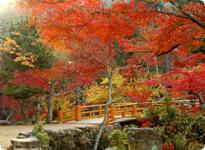 紅葉谷公園の紅葉,広島,紅葉,