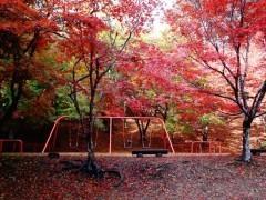 尾関山公園の紅葉,広島,紅葉,