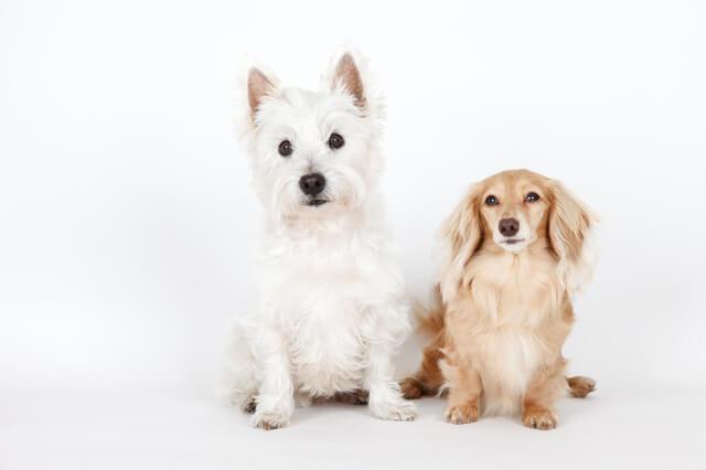 犬の種類,長距離ドライブ,
