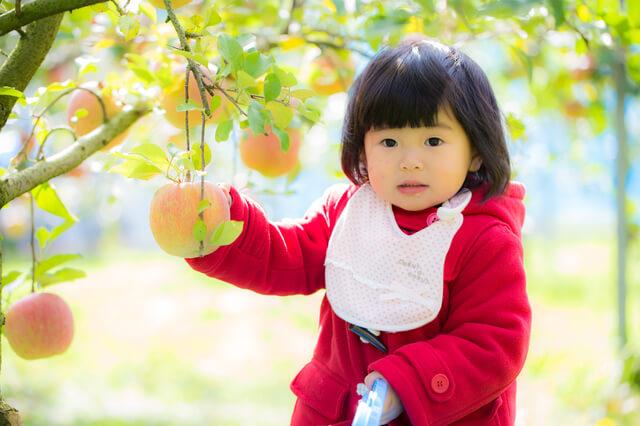 りんごを触る女の子,秋,味覚狩り,