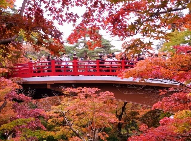 弥彦公園の紅葉,新潟,紅葉,