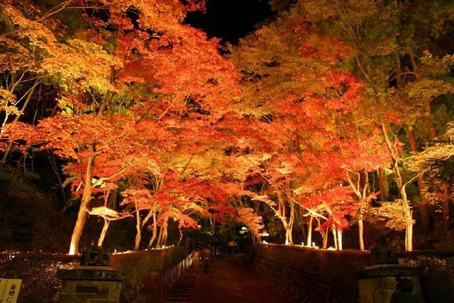 松雲山荘ライトアップ,新潟,紅葉,