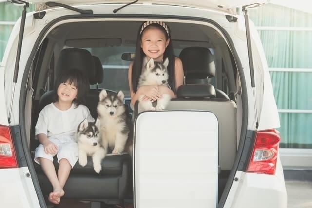 車に乗っている犬と子ども,修善寺しいたけの里,