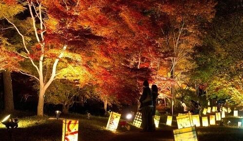 国営武蔵丘陵 森林公園,紅葉,埼玉,