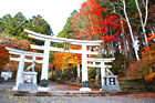 三峯神社,紅葉,埼玉,