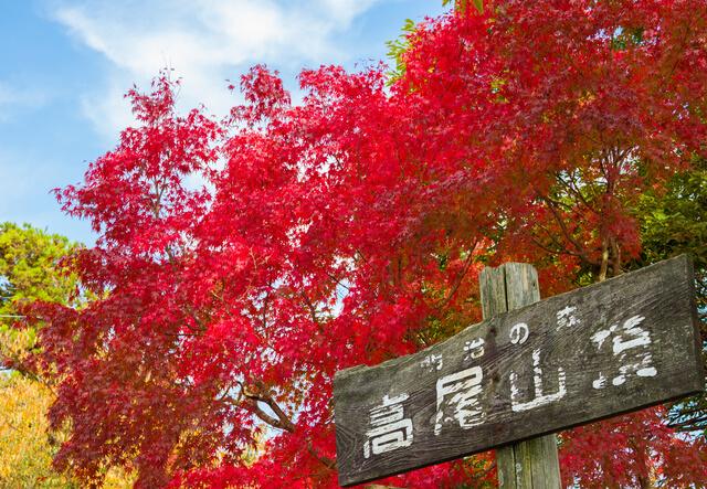 高尾山頂と紅葉,関東,紅葉,