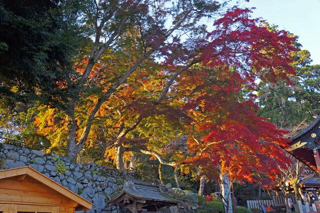筑波山の紅葉,関東,紅葉,