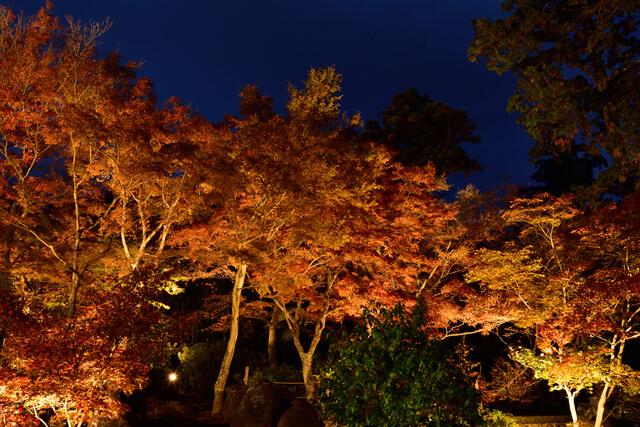 ライトアップされた筑波山,関東,紅葉,