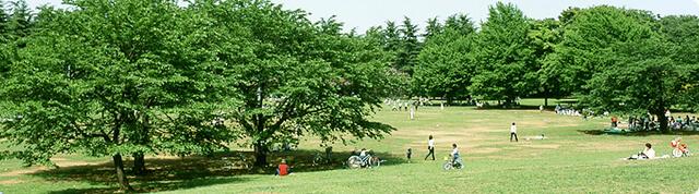 光が丘公園,都内,お花見,バーベキュー