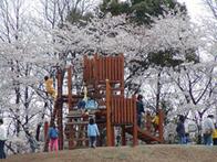 水元公園の冒険広場,都内,お花見,バーベキュー