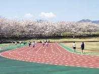 秋留台公園の競技場と桜,都内,お花見,バーベキュー