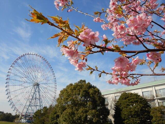 葛西臨海公園の桜,都内,お花見,バーベキュー