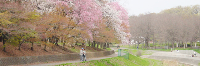 武蔵野公園,都内,お花見,バーベキュー