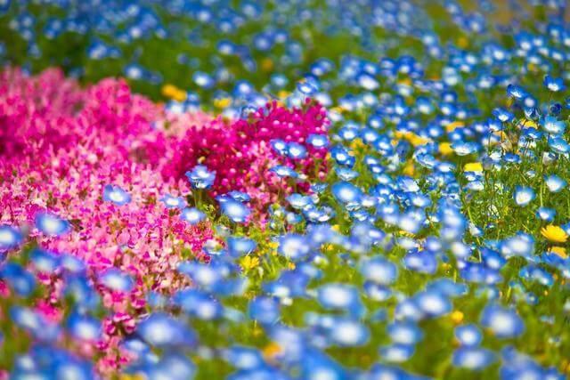 きれいな花たち,子供,ニット,帽