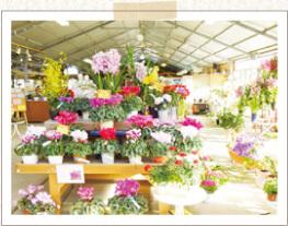 植物売店,館山,ファミリーパーク,