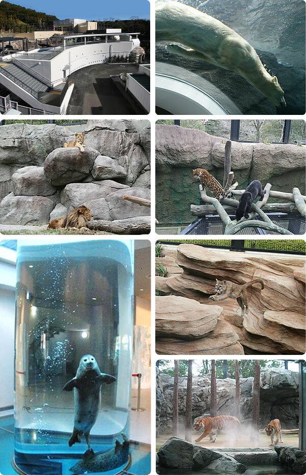 日本平動物園内の動物たち,久能,いちご狩り,