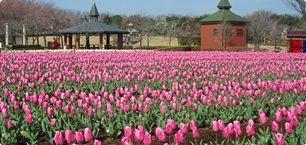 深谷グリーンパーク アクアパラダイスパティオの園内花壇,温水プール,埼玉,