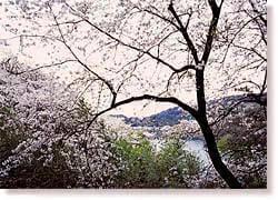 昭和池公園,福岡,植物園,おすすめ
