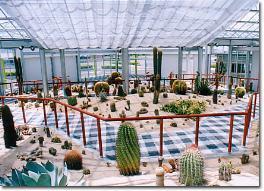 サボテンハウス,福岡,植物園,おすすめ