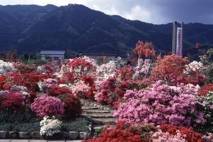 世界つつじセンター,福岡,植物園,おすすめ