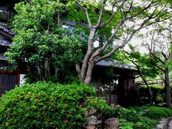 白野江植物公園,福岡,植物園,おすすめ