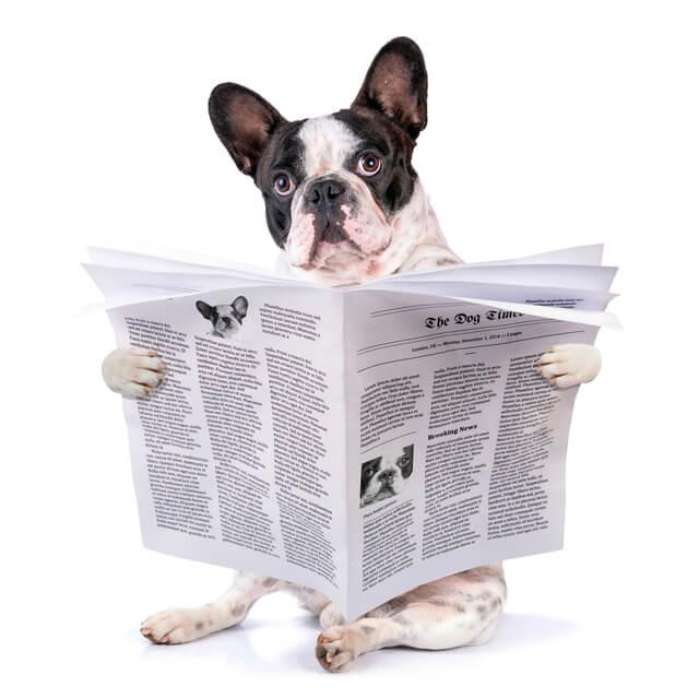 新聞紙 犬,子ども,室内遊び,新聞紙遊び