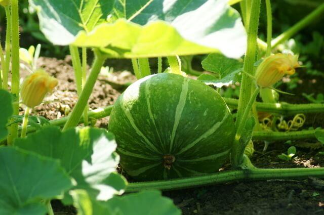 かぼちゃ畑,鴨川オーシャンパーク,バーベキュー,