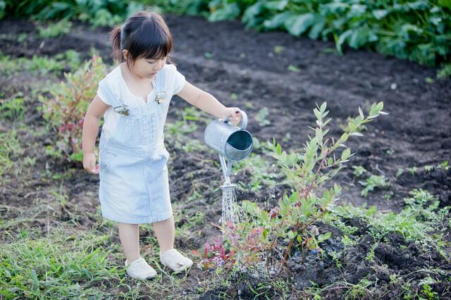 植物に水やりをする子ども,フウセンカズラ,育て方,魅力