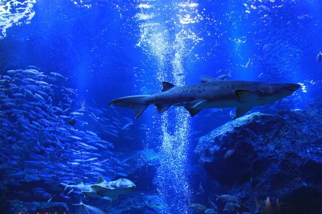 すみだ水族館,東京スカイツリー,プラネタリウム,