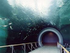 トンネル水槽,滋賀県立琵琶湖博物館,