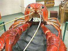 ザリガニになろう,滋賀県立琵琶湖博物館,