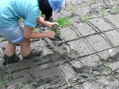 生活実験工房 田んぼ体験,滋賀県立琵琶湖博物館,