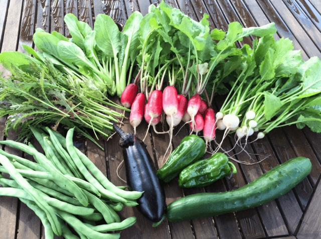 収穫された野菜,シェア畑,