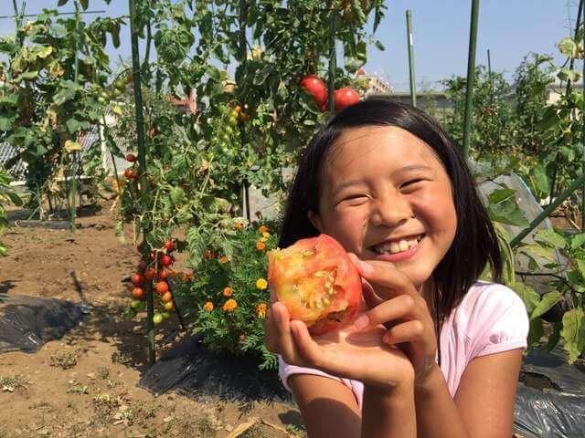 トマトを丸かじりする女の子,シェア畑,