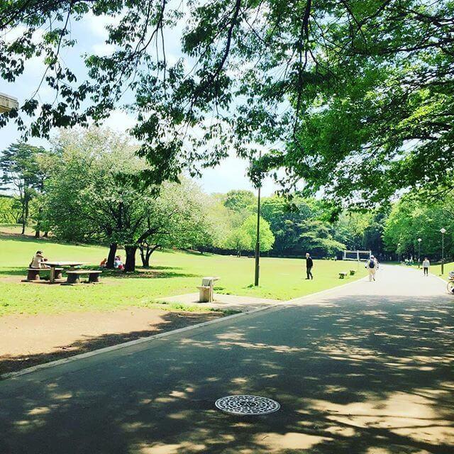 光が丘公園,ピクニック,公園,東京