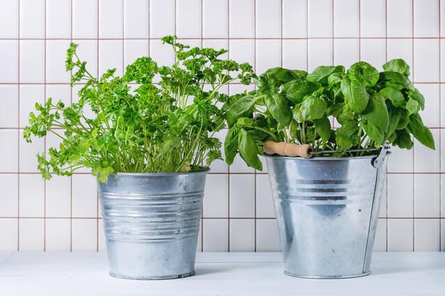 野菜 プランター 自宅 家庭菜園 初心者 ハーブ,プランター,野菜,