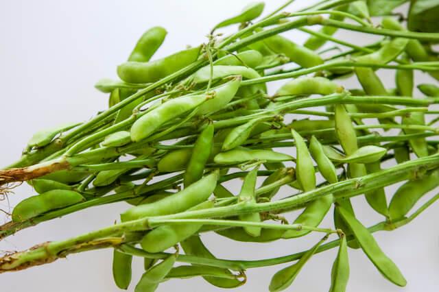 枝豆,プランター,野菜,