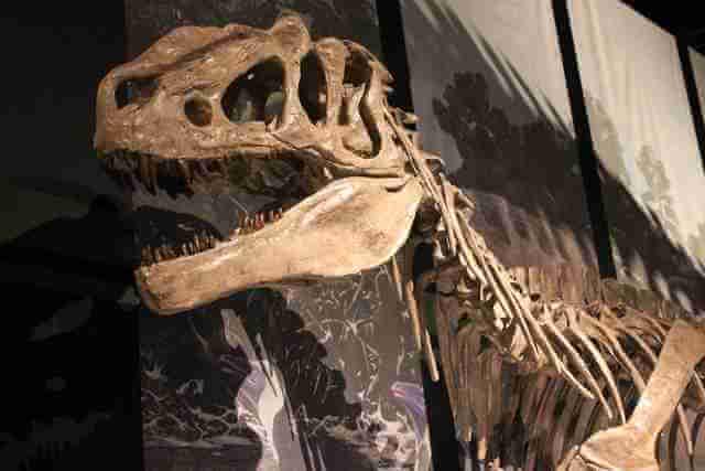 恐竜 絵本 子供 化石,恐竜,絵本,