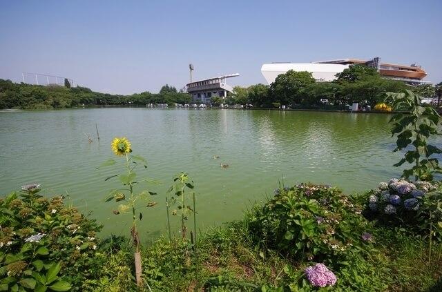 等々力緑地,武蔵小杉,イベント,