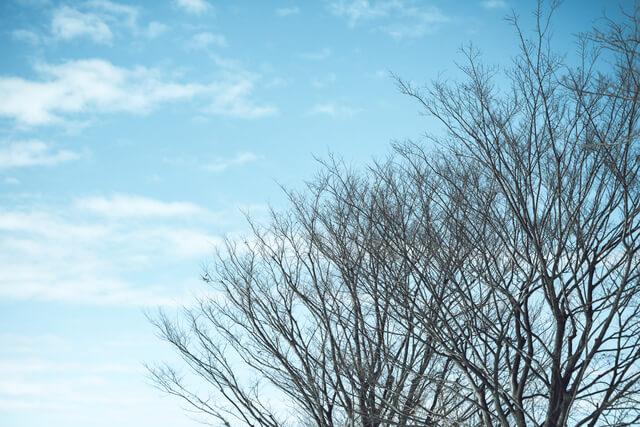 冬の木々,キッズ,パーカー,
