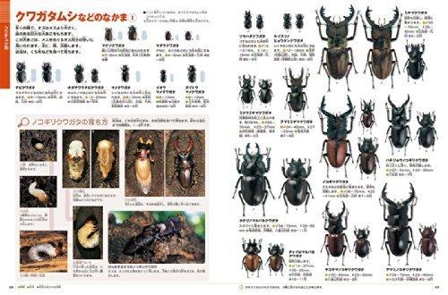 DVD付 新版 昆虫 (小学館の図鑑 NEO),虫,図鑑,