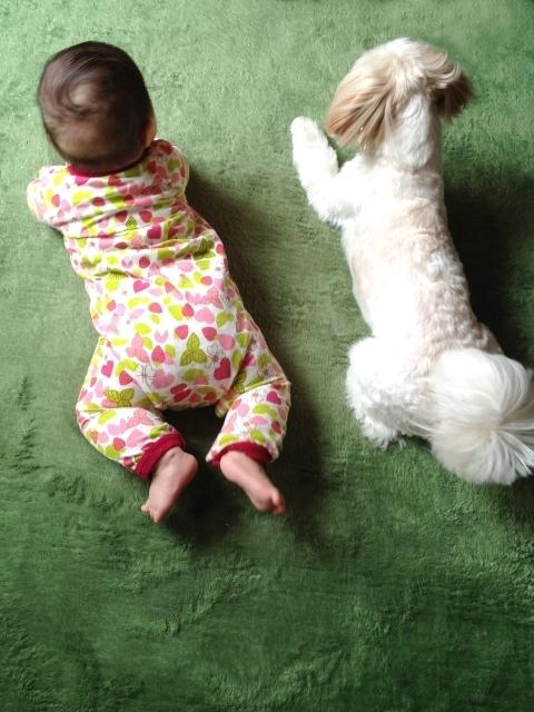 赤ちゃんと犬,粉ミルク,おすすめ,