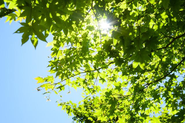 太陽と緑,UVカット,子供服,