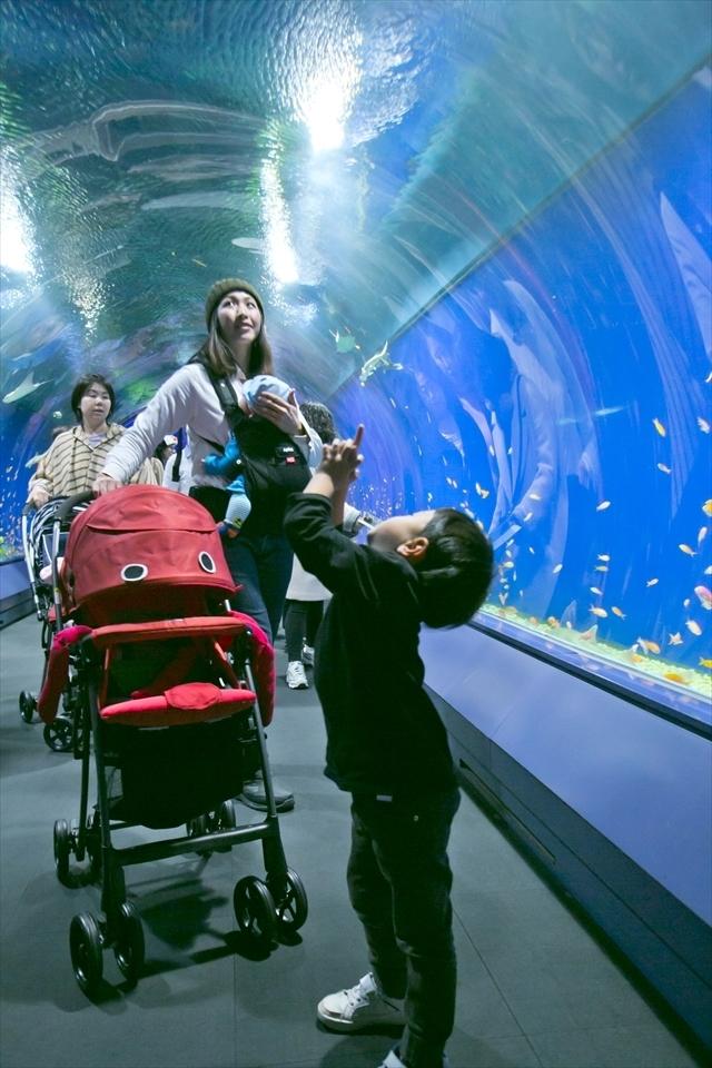 エントランスのドーム型水槽の回遊の様子,アップリカ,海遊館,赤ちゃん